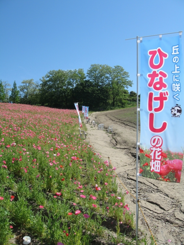 は 花畑 に の 上 丘 ここは天国!?青一色の花畑絶景!茨城にドライブしよう!|じゃらんニュース